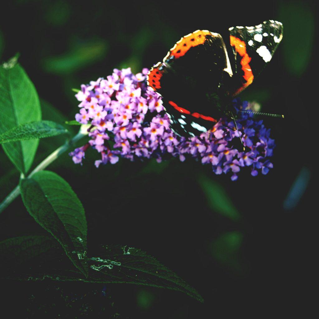 wildlife-updated