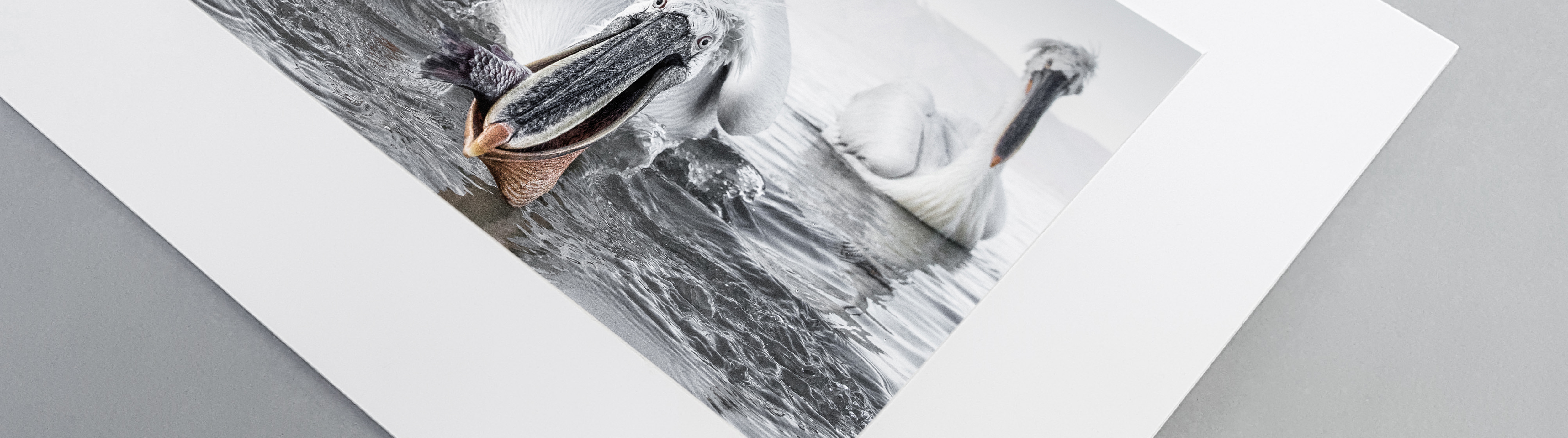 Fine Art matted Print